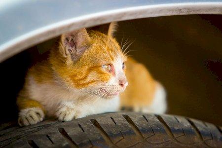 Esteja atento – as rodas do seu carro podem ser o abrigo de animais!