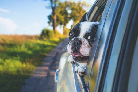 Conheça os cuidados a ter com os seus animais em viagem!