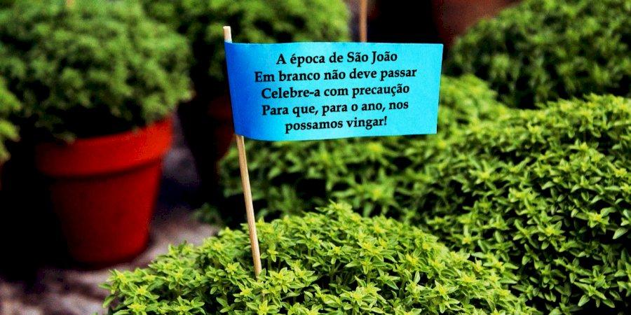 Neste São João, mantenha a precaução!