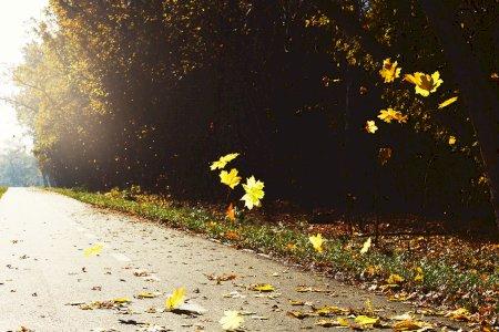 Com o Outono a chegar, folhas na estrada podem chatear!